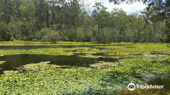 D'Aguilar National Park4