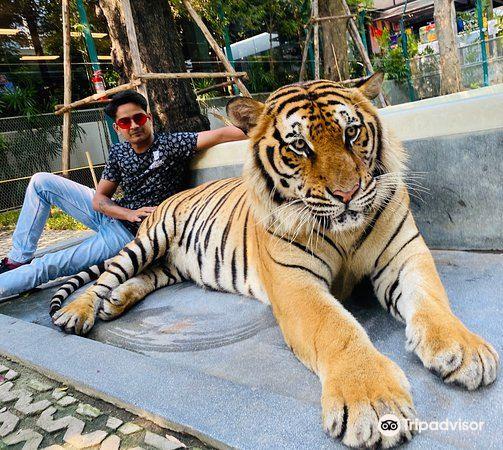 Tiger Park Pattaya2