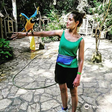 Macaw Mountain1