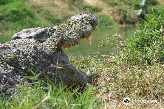 Kalimba Reptile Park4
