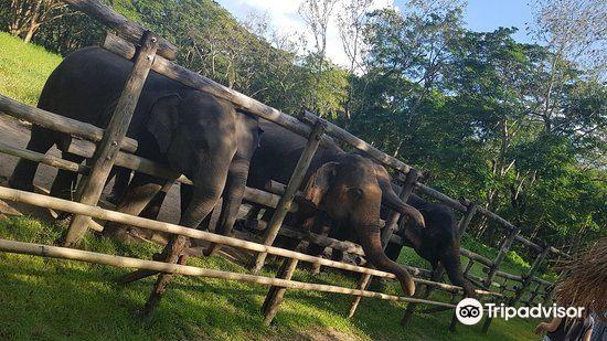 Elephant Valley Thailand4