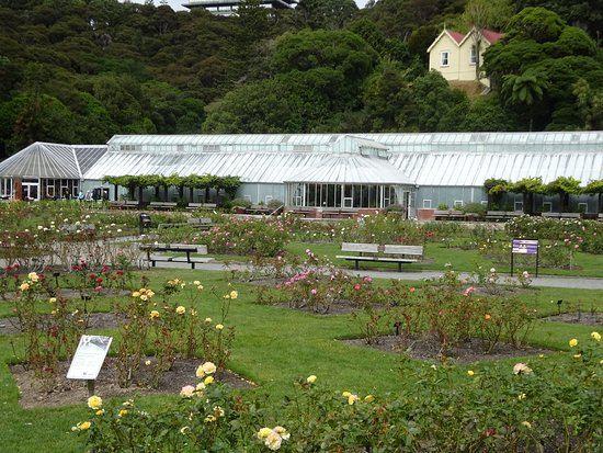 Lady Norwood Rose Garden4