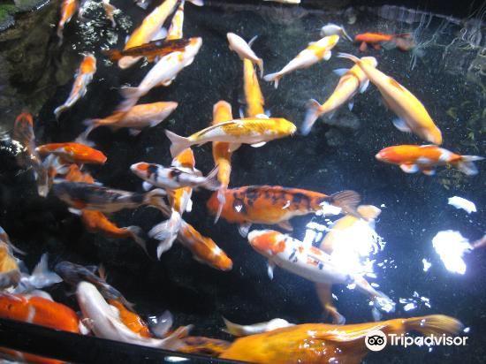 Aquarium de Paris - CineAqua4