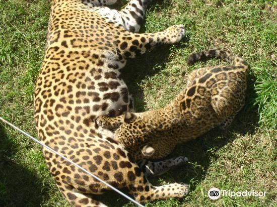 Zoo de Batan3