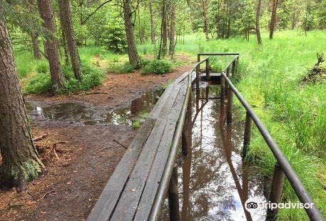 Naturpark Heidereichsteiner Moor