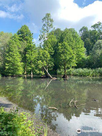 Botanischer Garten Rombergpark2