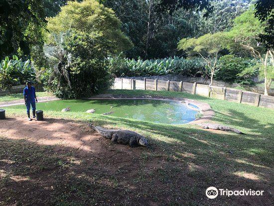 Riverbend Crocodile Farm4
