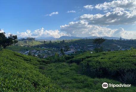 Nuwara Elia and Tea Country
