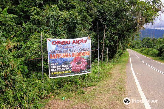 Adenna Rafflesia Garden2