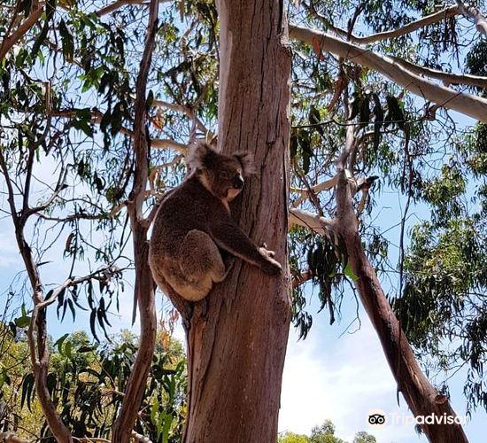 Hanson Bay Wildlife Sanctuary3