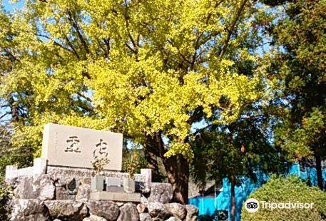 Kumano Taisha Shrine