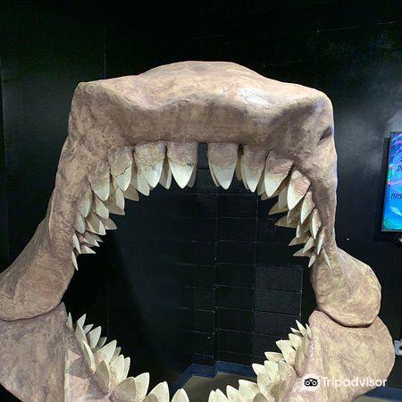 Shreveport Aquarium3