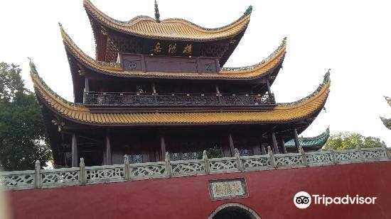 大雲山國家森林公園4