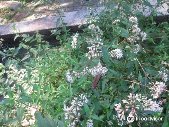 일월담 나비 공원2