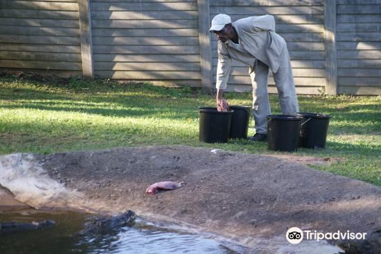 Riverbend Crocodile Farm2