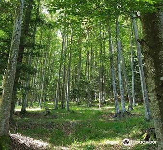 Riserva Naturale Val Alba