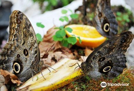 Butterfly House Praid