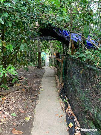 Adenna Rafflesia Garden1