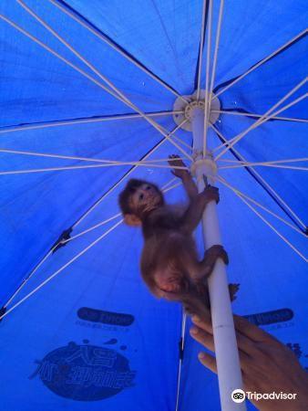 번시 동물원 - 북서문 1번 입구1