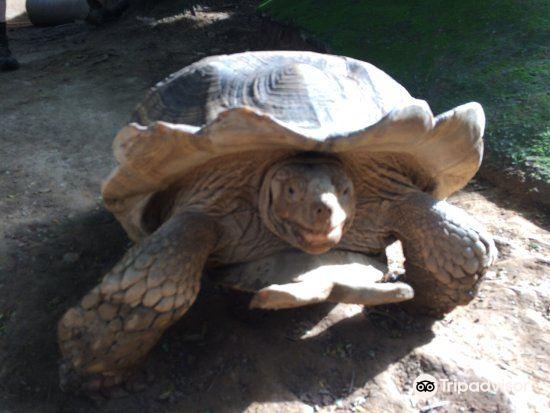 Kumasi Zoo3