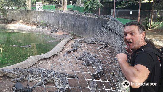鱷魚農場4