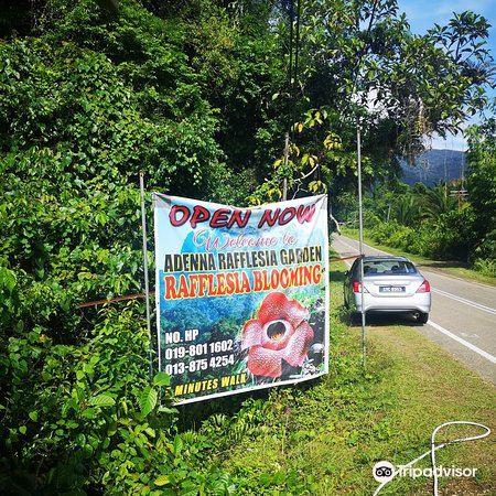 Adenna Rafflesia Garden4