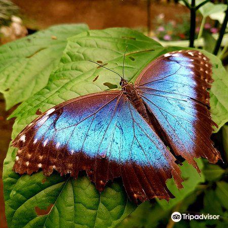 Butterfly Conservatory4