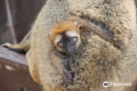 Kirindy Forest Morondava Madagascar4