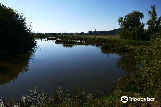 Jerrabomberra Wetland2