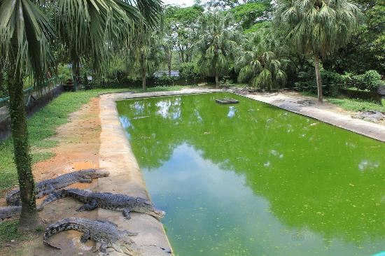 Crocodile Adventureland Langkawi1
