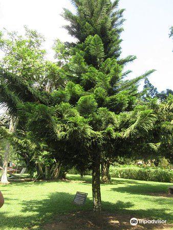 Aburi Botanical Gardens2