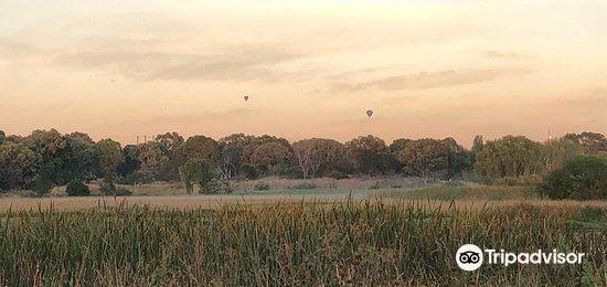 Jerrabomberra Wetland4