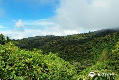Monteverde Cloud Forest Biological Reserve