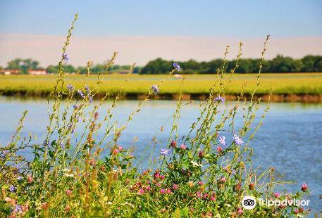 Port Meadow