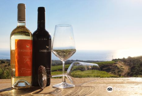 Tenuta Asinara - Wine Tasting