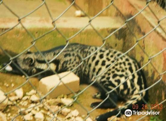 Kumasi Zoo4