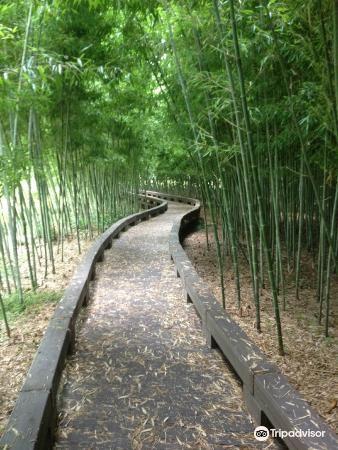 한국대나무박물관4