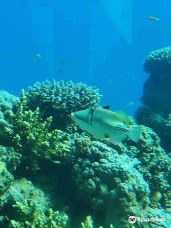 Underwater Observatory Marine Park