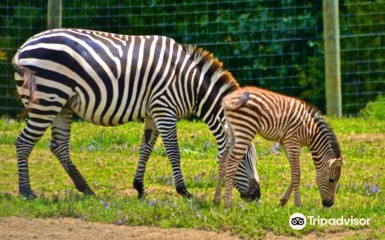 漢密爾頓動物園3