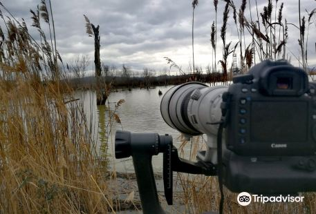 Riserva Naturale Lago di Montepulciano