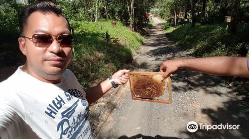 Gombizau Honey Bee Farm
