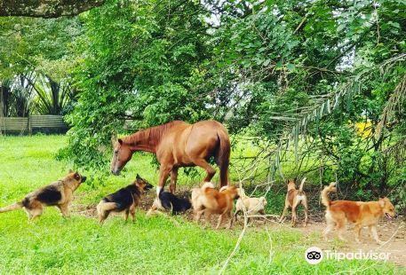 Noah's Ark Natural Animal Sanctuary