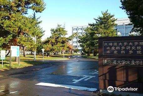 北海道大學附屬圖書館 北圖書館