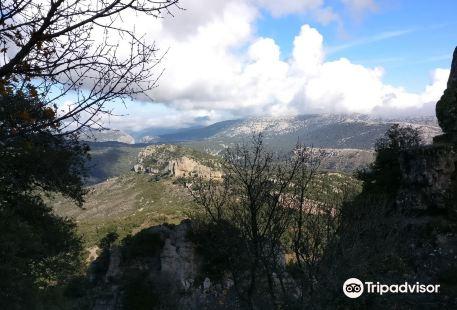 Foresta Demaniale Montes