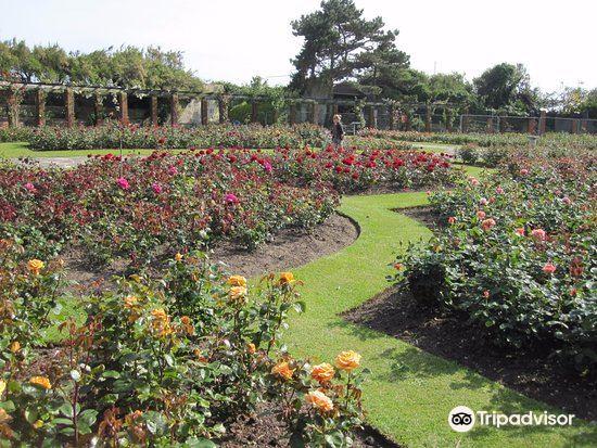 Southsea Rose Garden3