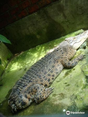楊氏鱷魚場