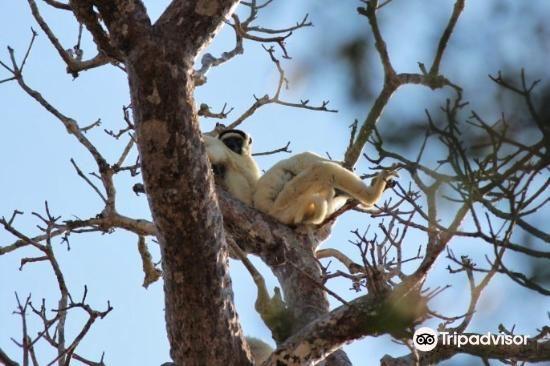 Kirindy Forest Morondava Madagascar1
