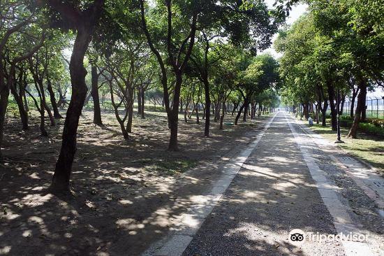 原生植物園3