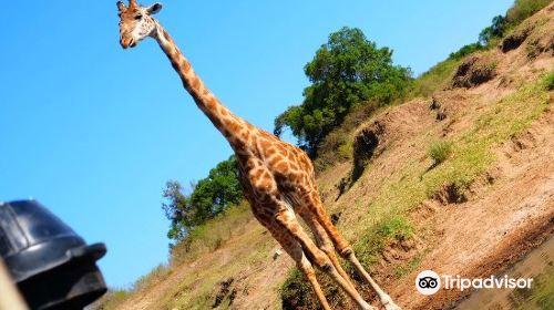 Beach Air Tours & Safaris