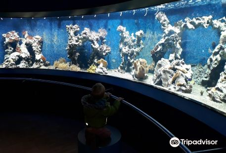 Aquazoo Loebbecke Museum